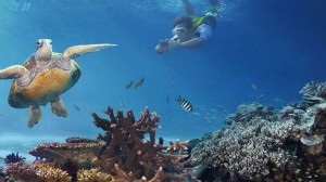 explore-icons-great-barrier-reef